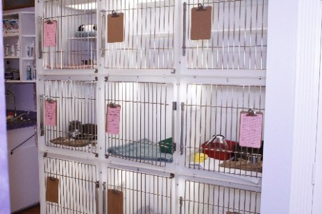 Hospital Condo Cages